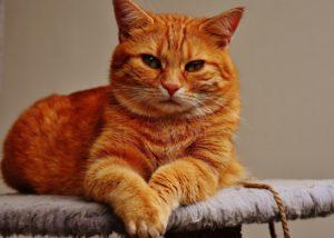 cat-1675437_1280